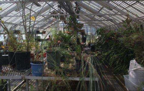 Forgotten Garden: COS Botanical Garden Overgrown and in Need of Volunteers