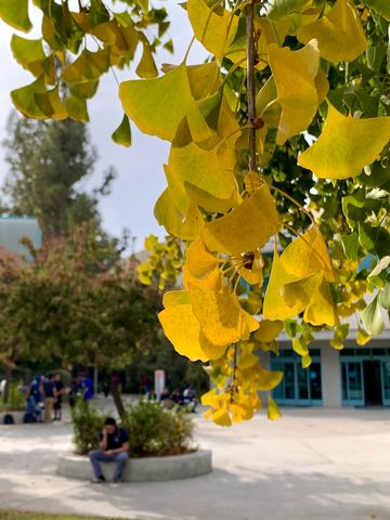 Fall is starting to show it's true colors in front of the Library.