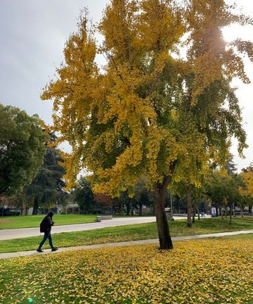 The Quad is finally full of the colors of the seasons.