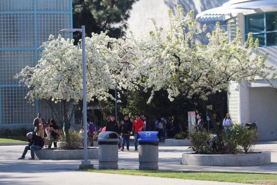 Blossom+Trees