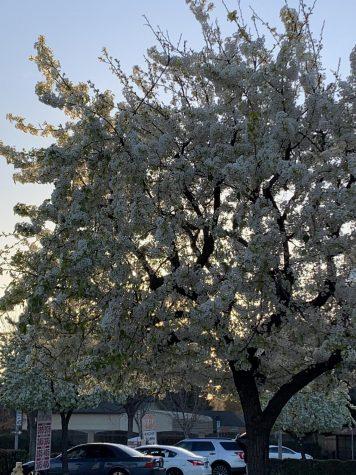 Spring is in bloom