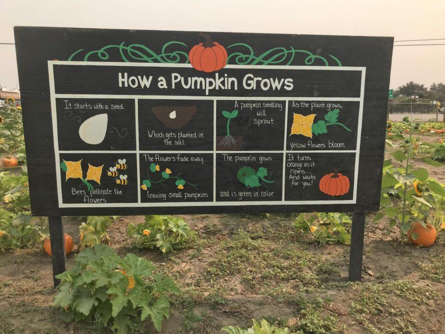 How a Pumpkin grows sign at Vossler Farms Pumpkin Patch